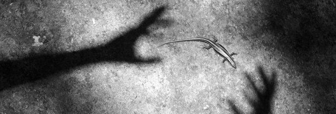 cropped-shadow-lizard-l-l